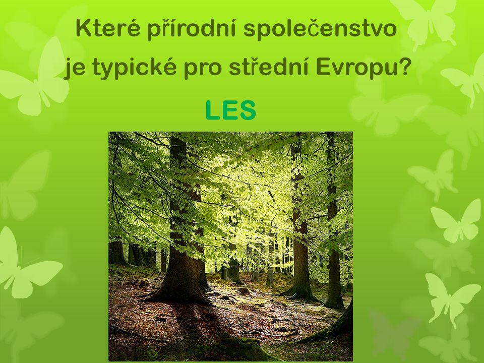Které přírodní společenstvo je typické pro střední Evropu