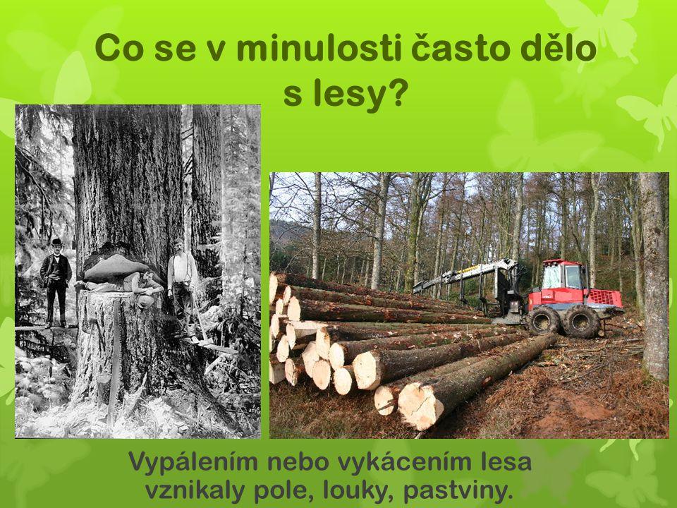 Co se v minulosti často dělo s lesy