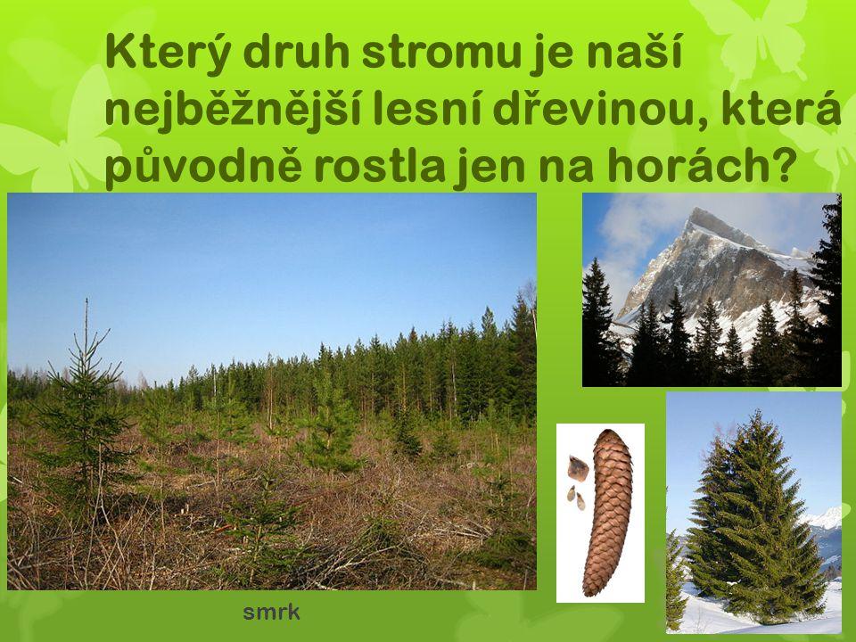 Který druh stromu je naší nejběžnější lesní dřevinou, která původně rostla jen na horách