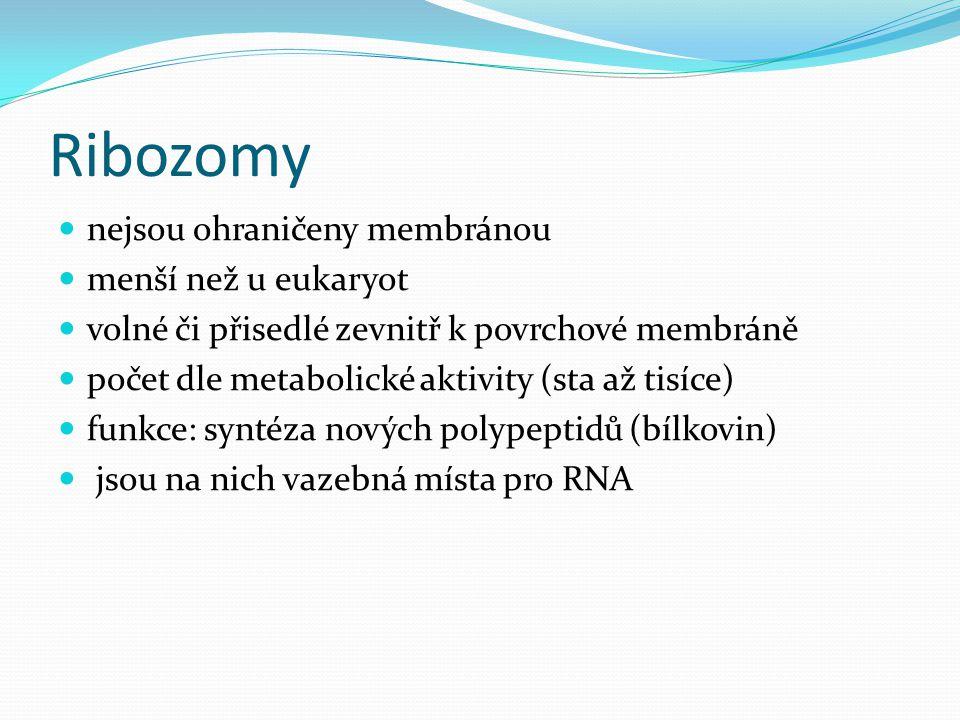 Ribozomy nejsou ohraničeny membránou menší než u eukaryot