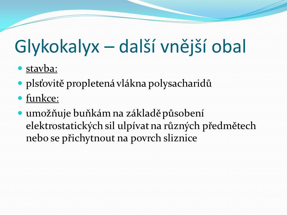 Glykokalyx – další vnější obal
