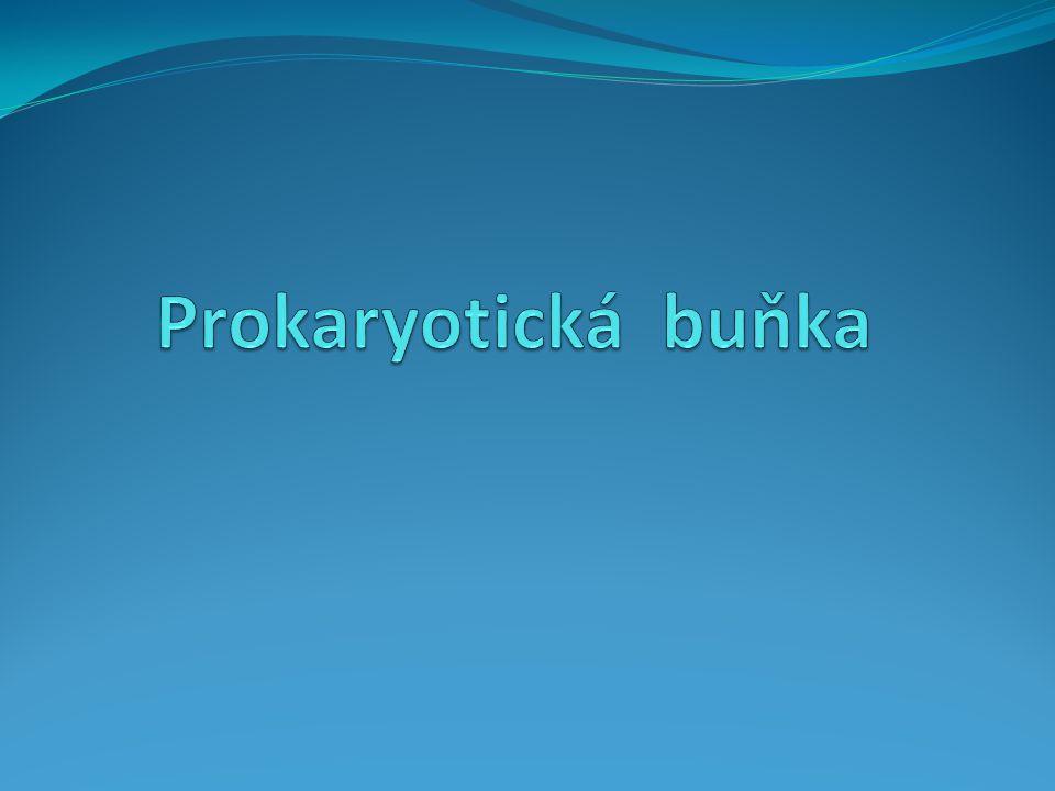 Prokaryotická buňka
