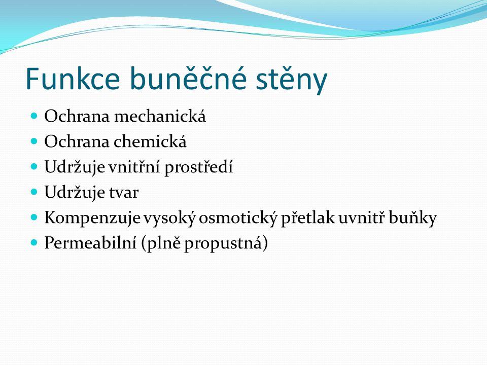 Funkce buněčné stěny Ochrana mechanická Ochrana chemická