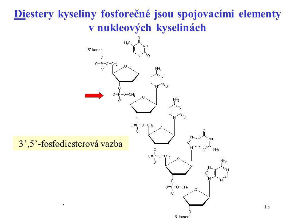 3',5'-fosfodiesterová vazba