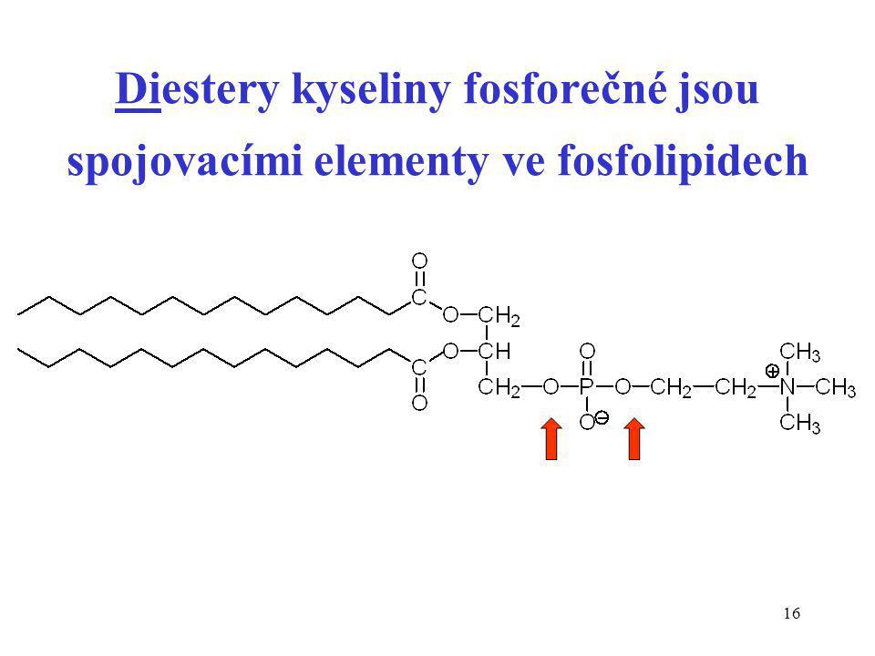 Diestery kyseliny fosforečné jsou spojovacími elementy ve fosfolipidech