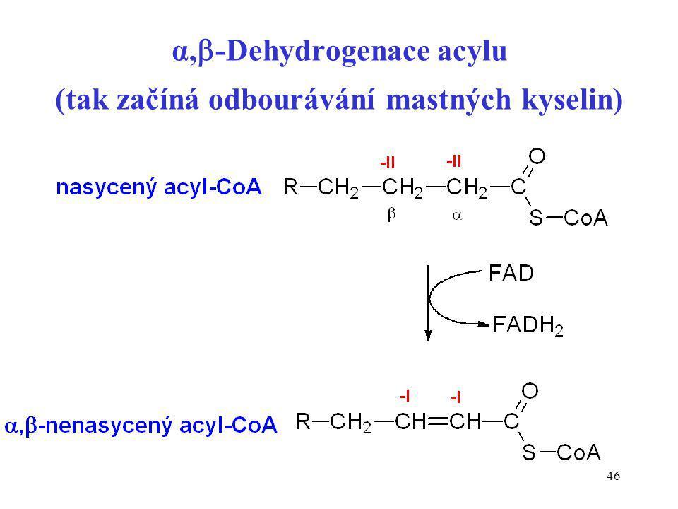 α,-Dehydrogenace acylu (tak začíná odbourávání mastných kyselin)