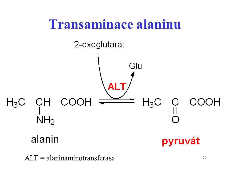 Transaminace alaninu ALT = alaninaminotransferasa