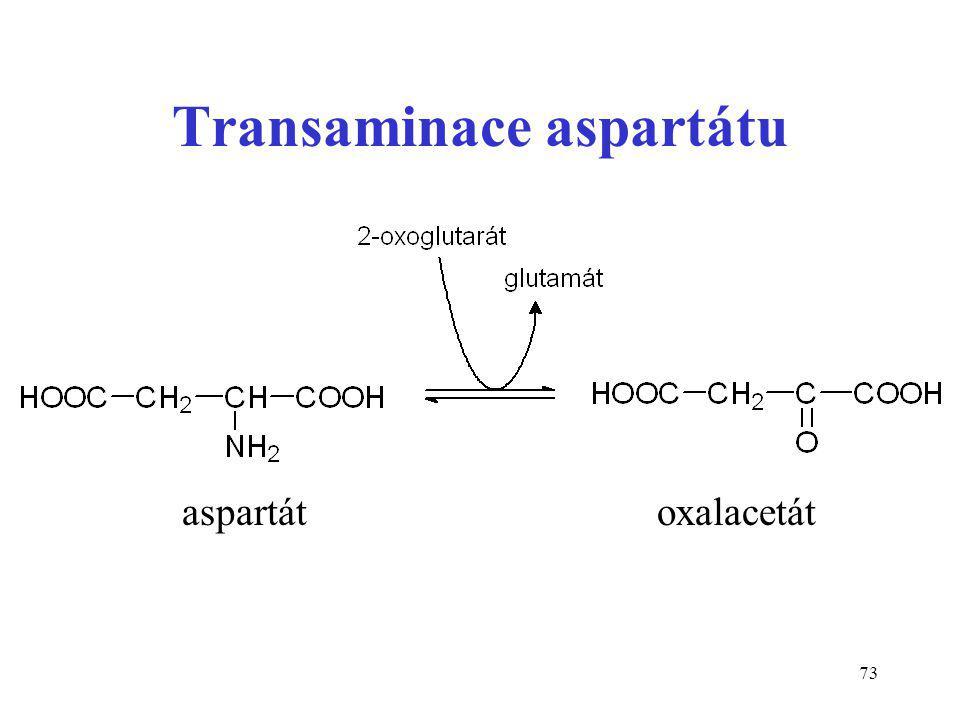 Transaminace aspartátu