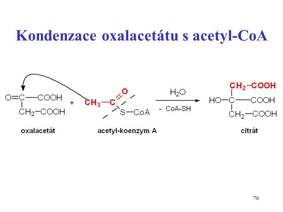 Kondenzace oxalacetátu s acetyl-CoA