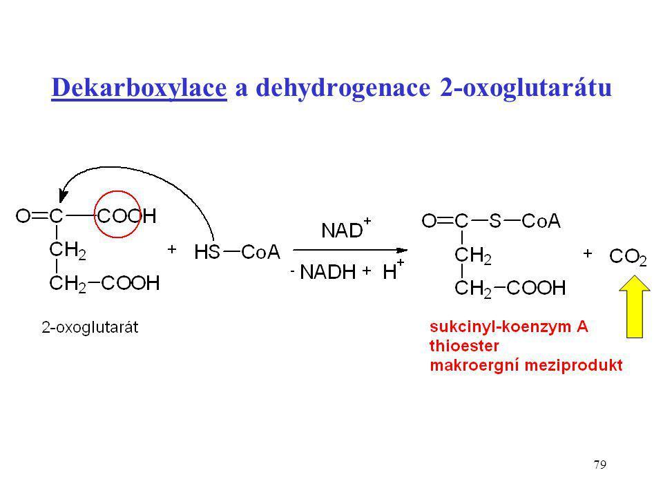 Dekarboxylace a dehydrogenace 2-oxoglutarátu