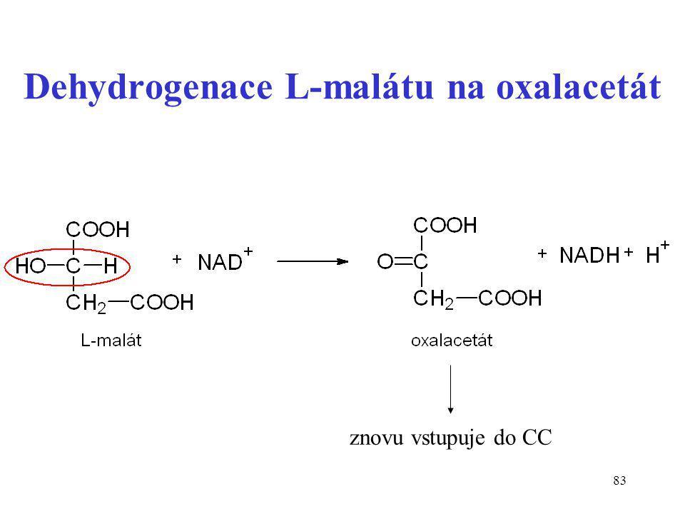 Dehydrogenace L-malátu na oxalacetát