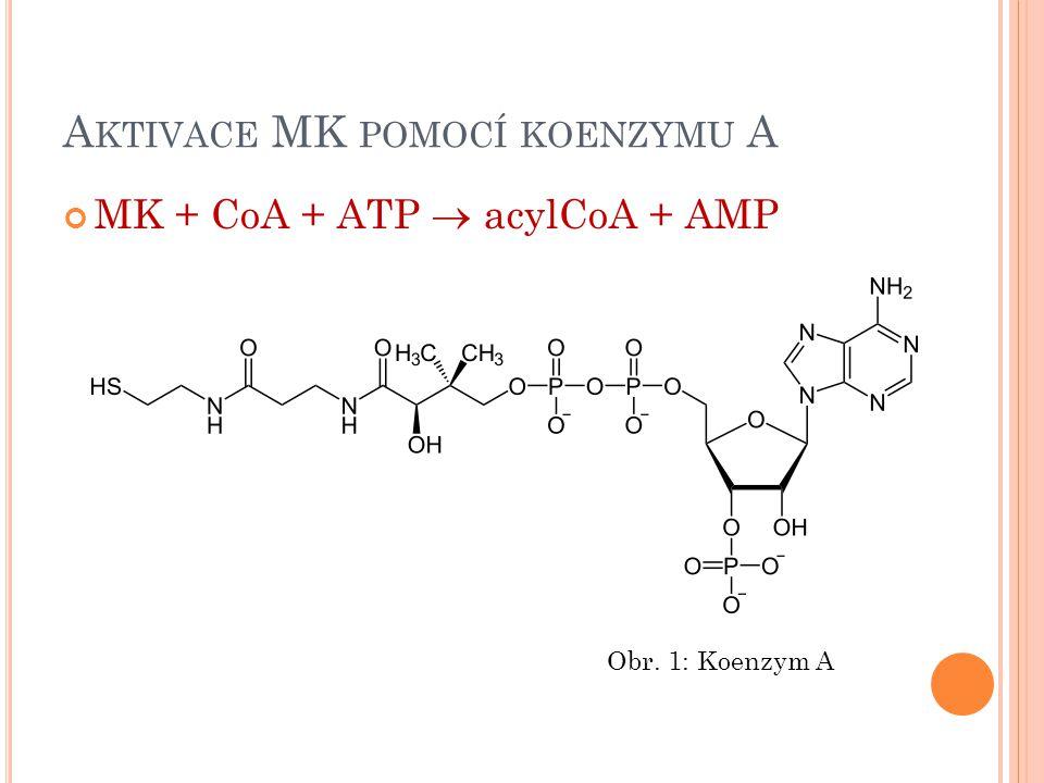 Aktivace MK pomocí koenzymu A