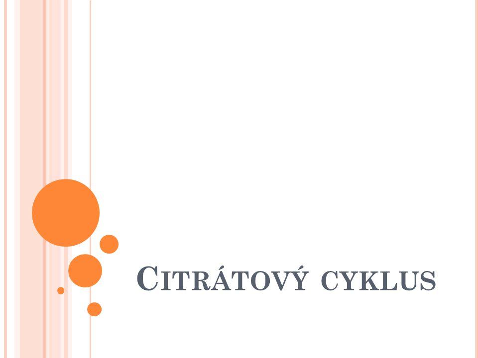 Citrátový cyklus
