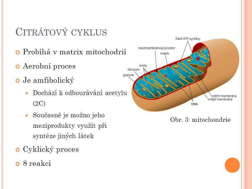 Citrátový cyklus Probíhá v matrix mitochodrií Aerobní proces
