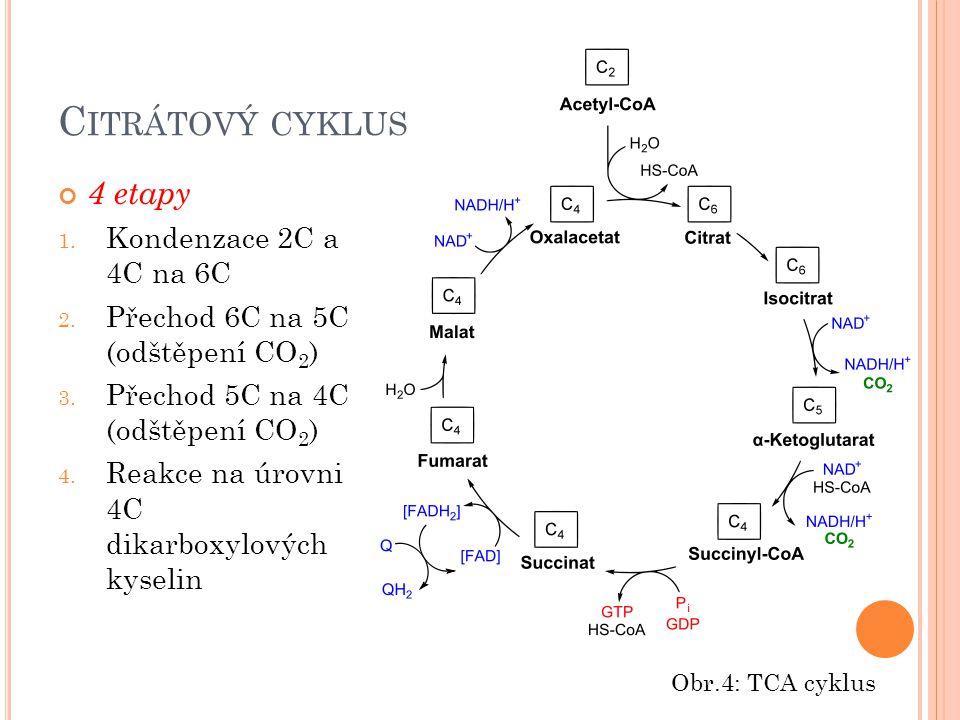 Citrátový cyklus 4 etapy Kondenzace 2C a 4C na 6C