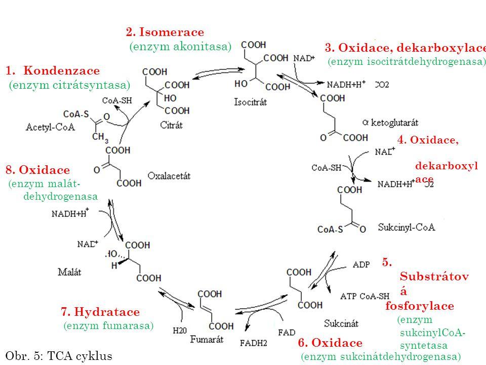 3. Oxidace, dekarboxylace