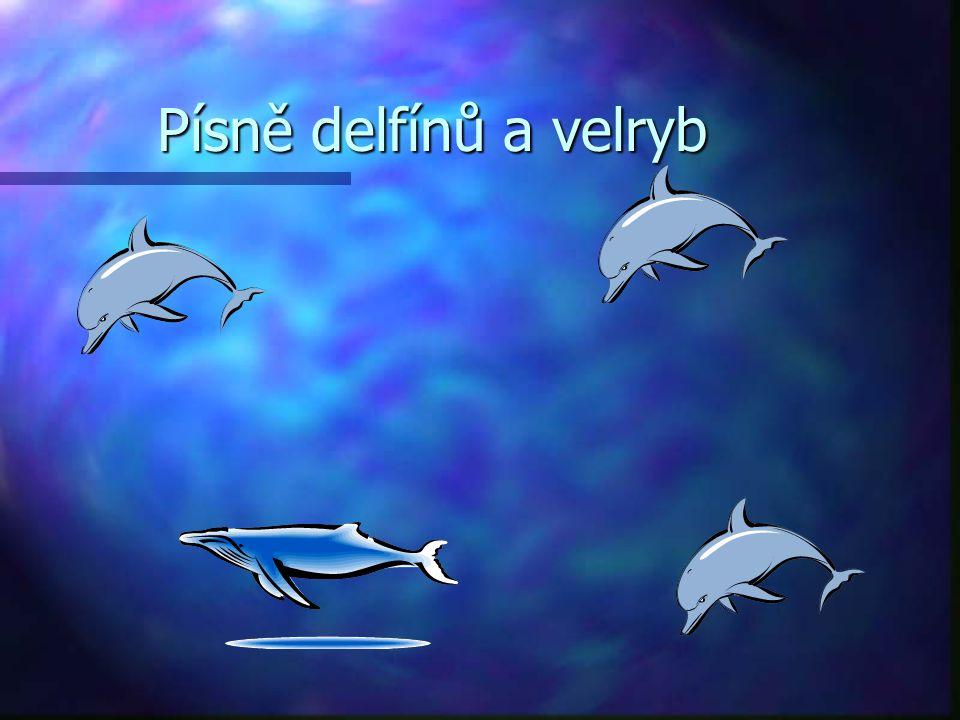 Písně delfínů a velryb