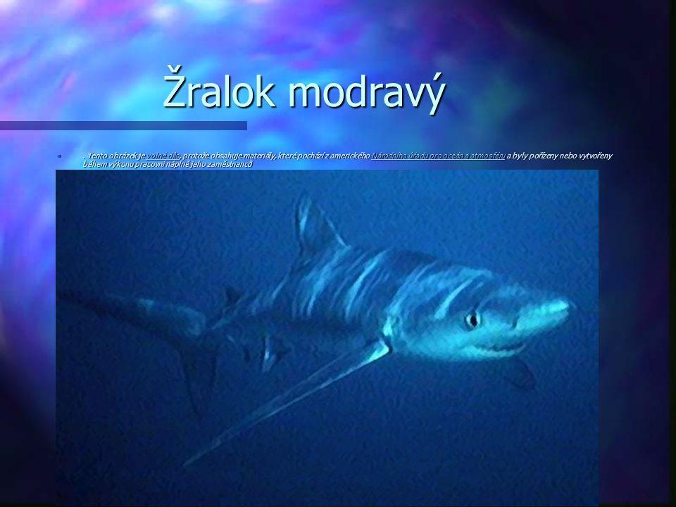 Žralok modravý