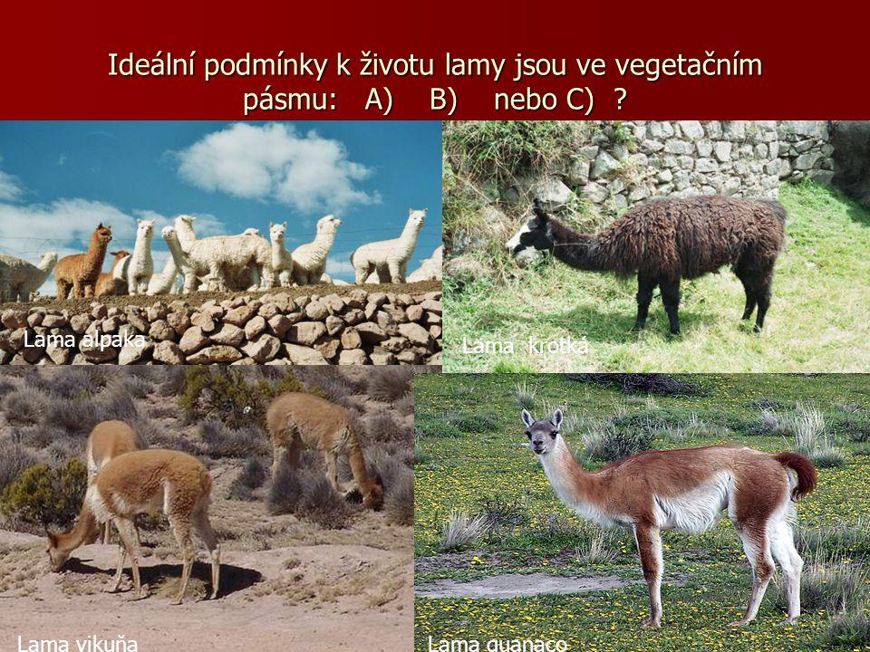Ideální podmínky k životu lamy jsou ve vegetačním pásmu: A) B) nebo C)
