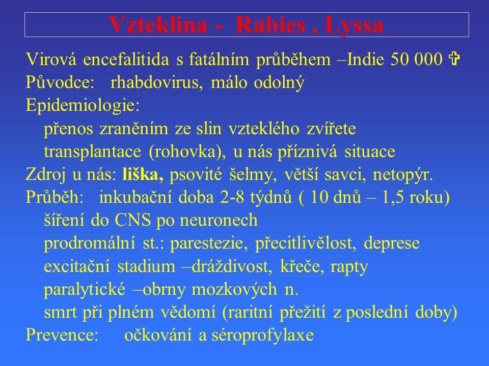 Vzteklina - Rabies , Lyssa