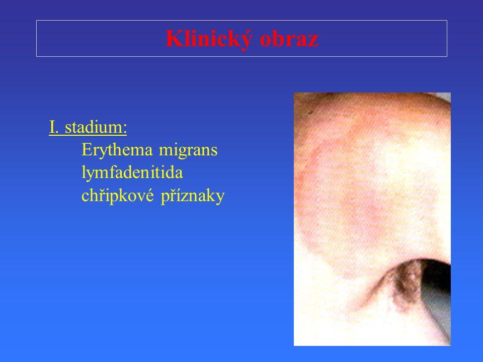 Klinický obraz I. stadium: Erythema migrans lymfadenitida