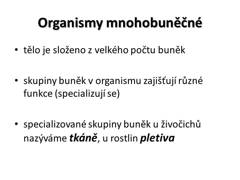 Organismy mnohobuněčné