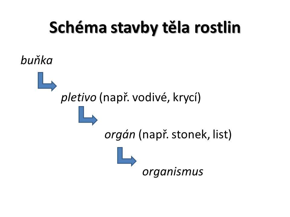 Schéma stavby těla rostlin