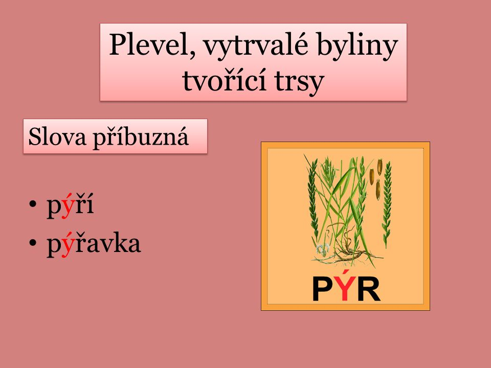 Plevel, vytrvalé byliny tvořící trsy