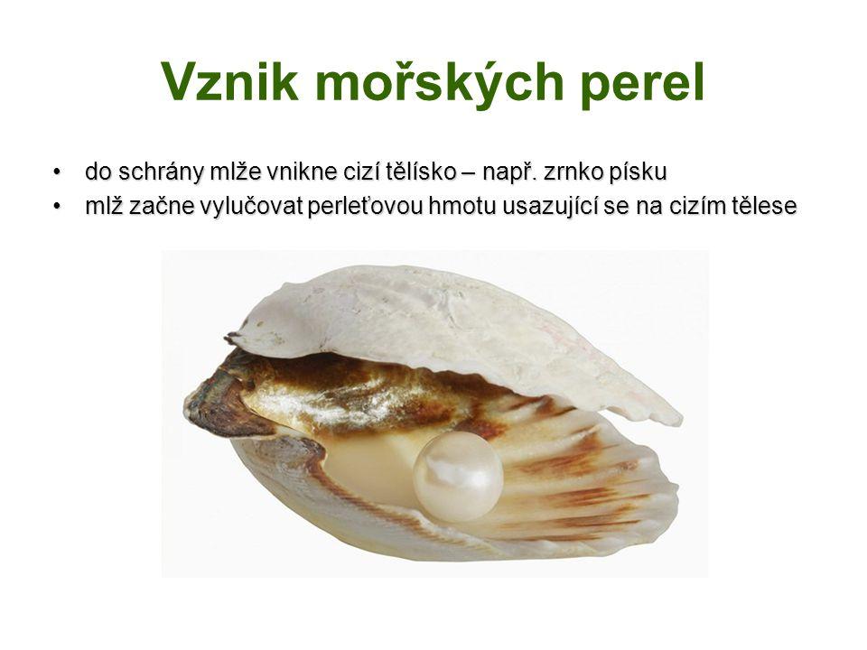 Vznik mořských perel do schrány mlže vnikne cizí tělísko – např.