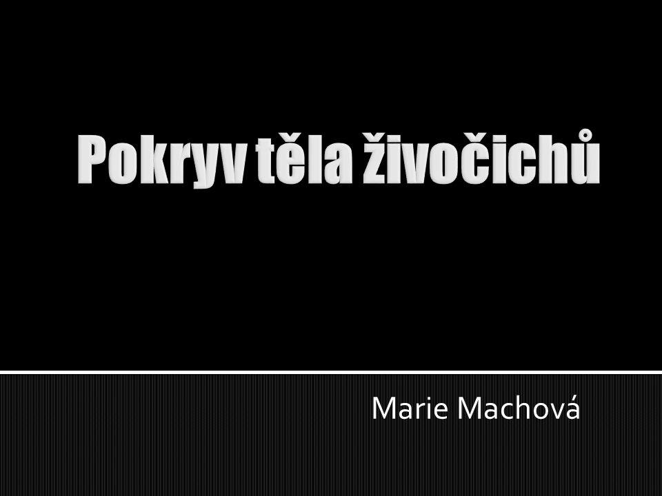 Pokryv těla živočichů Marie Machová
