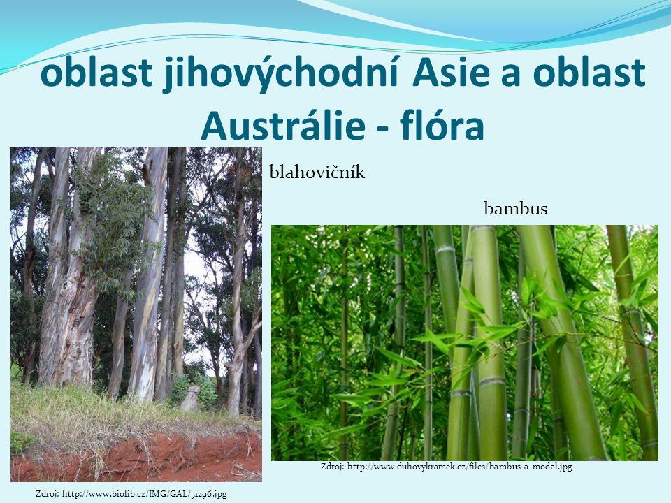 oblast jihovýchodní Asie a oblast Austrálie - flóra