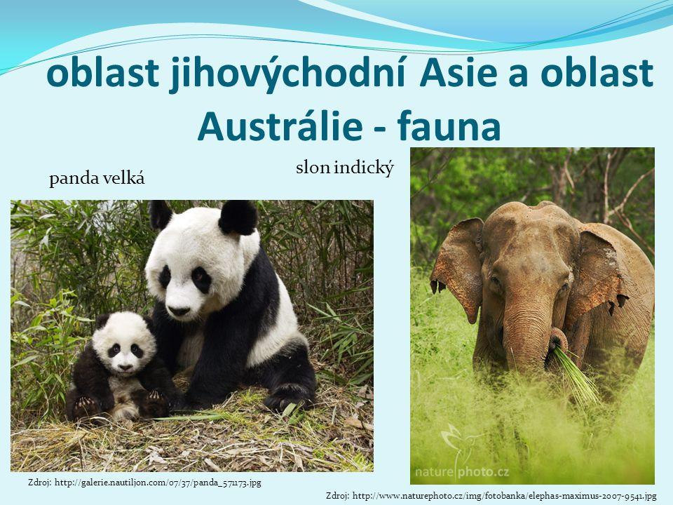 oblast jihovýchodní Asie a oblast Austrálie - fauna