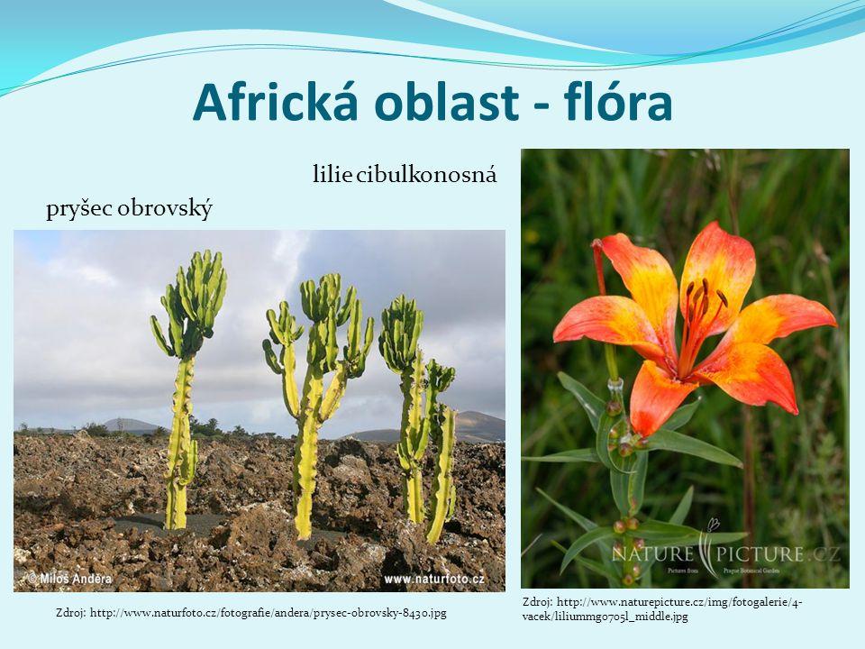 Africká oblast - flóra lilie cibulkonosná pryšec obrovský