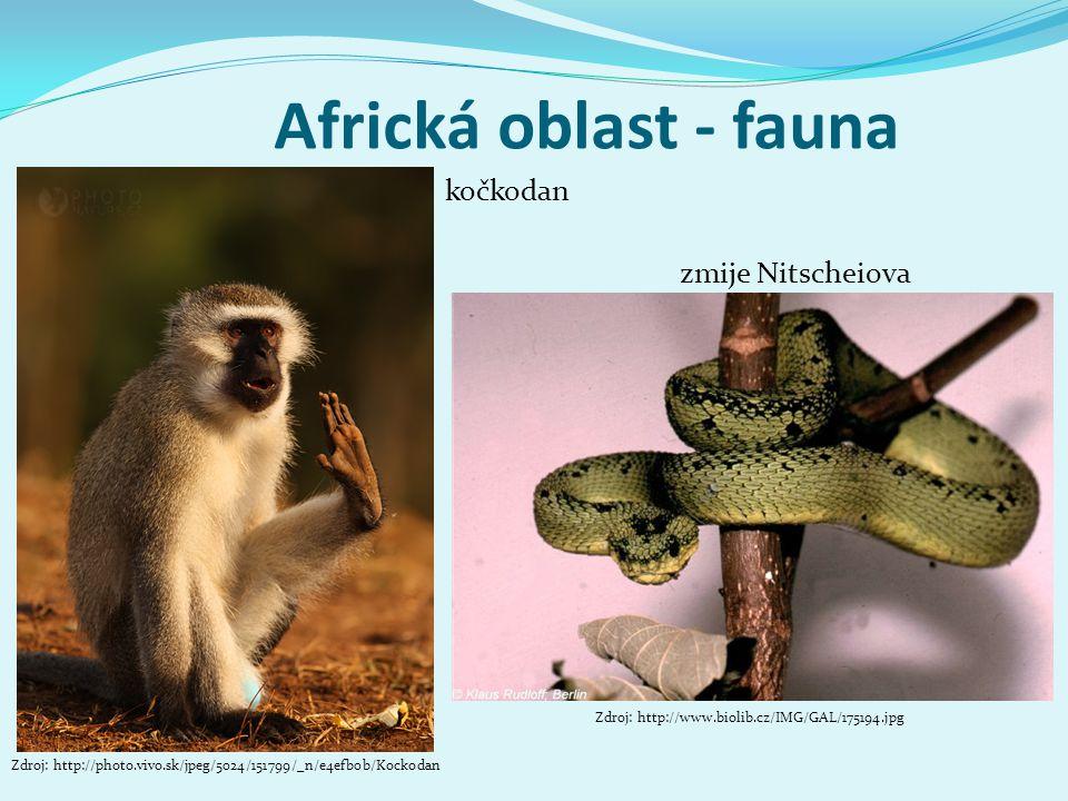 Africká oblast - fauna kočkodan zmije Nitscheiova