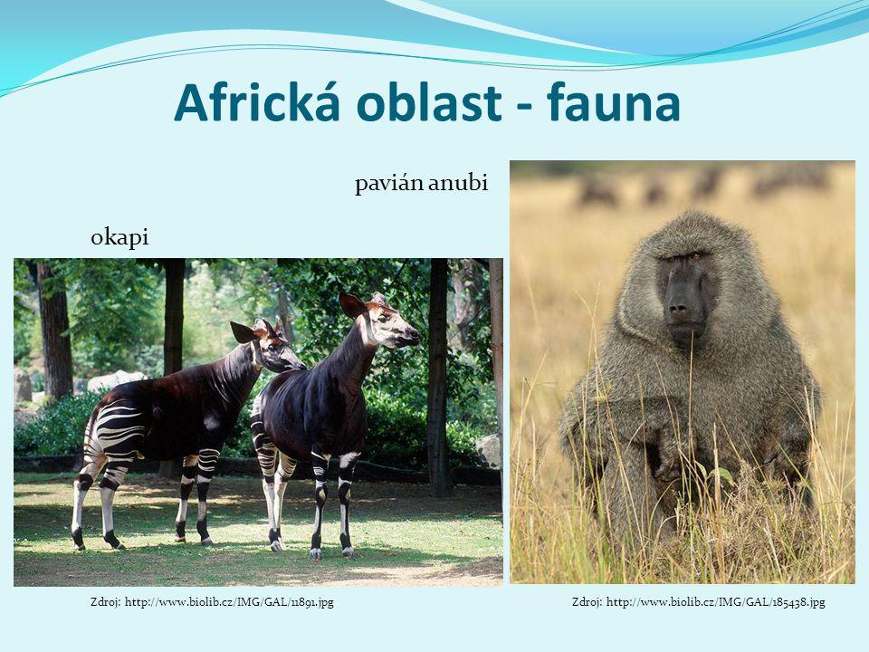 Africká oblast - fauna pavián anubi okapi