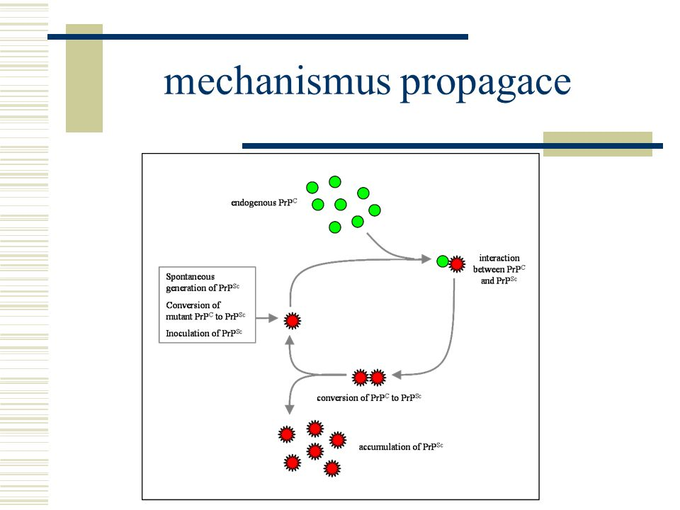 mechanismus propagace