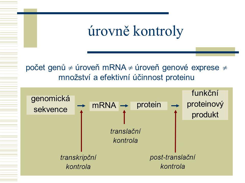 úrovně kontroly počet genů  úroveň mRNA  úroveň genové exprese  množství a efektivní účinnost proteinu.