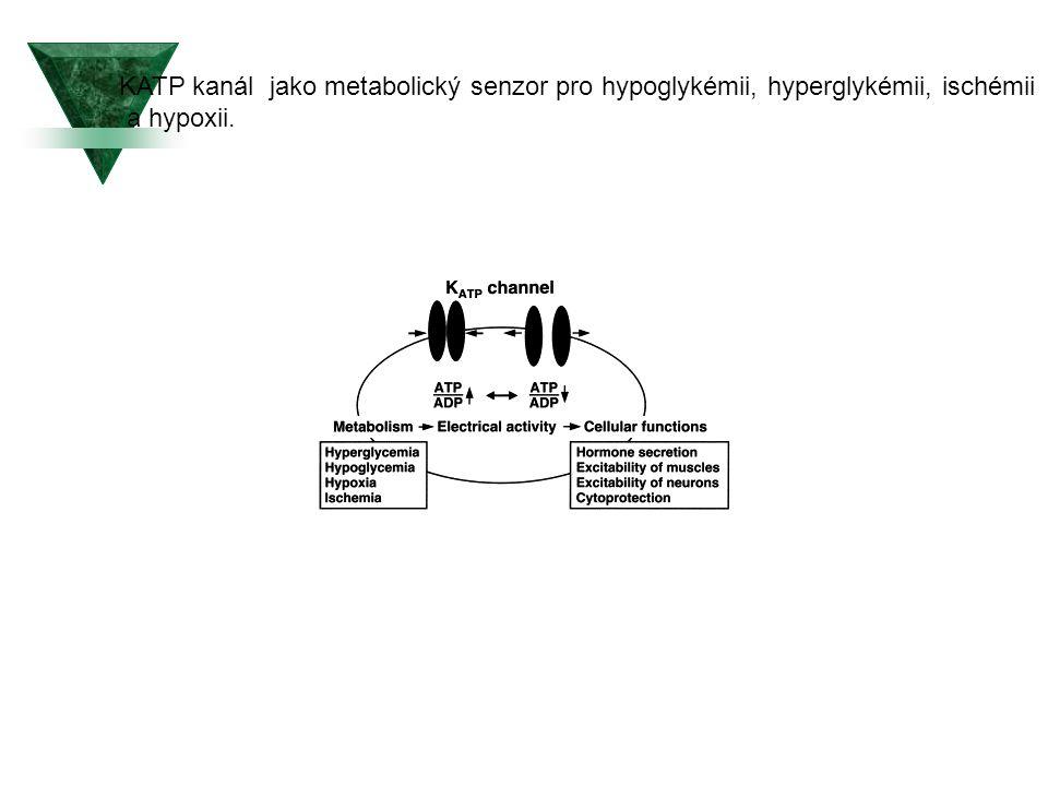 KATP kanál jako metabolický senzor pro hypoglykémii, hyperglykémii, ischémii
