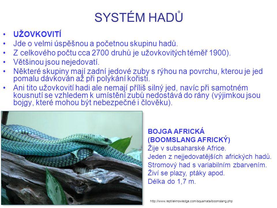 SYSTÉM HADŮ UŽOVKOVITÍ Jde o velmi úspěšnou a početnou skupinu hadů.