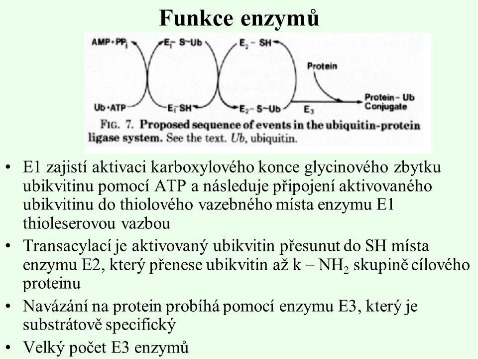Funkce enzymů