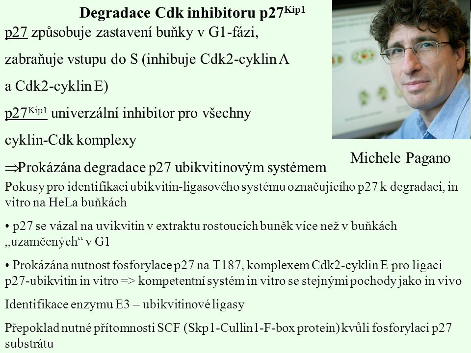 Degradace Cdk inhibitoru p27Kip1