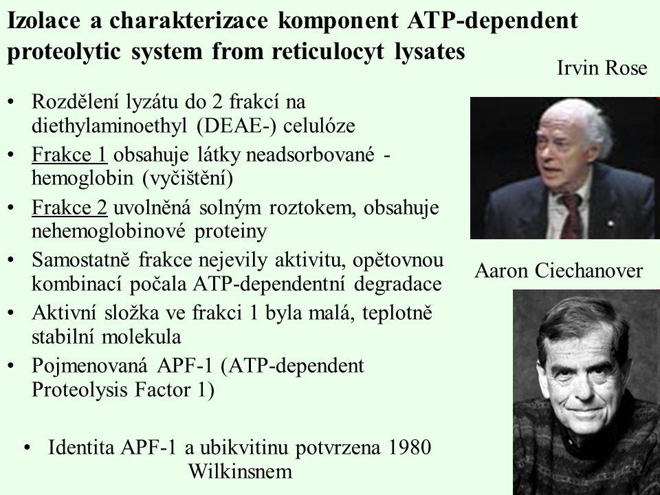 Identita APF-1 a ubikvitinu potvrzena 1980 Wilkinsnem