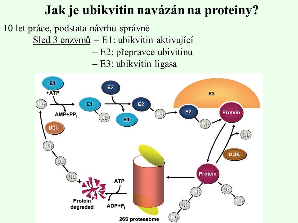 Jak je ubikvitin navázán na proteiny