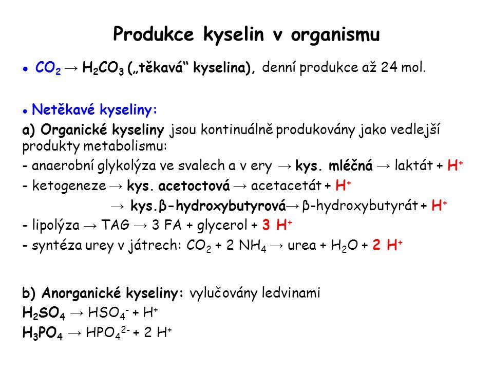 Produkce kyselin v organismu