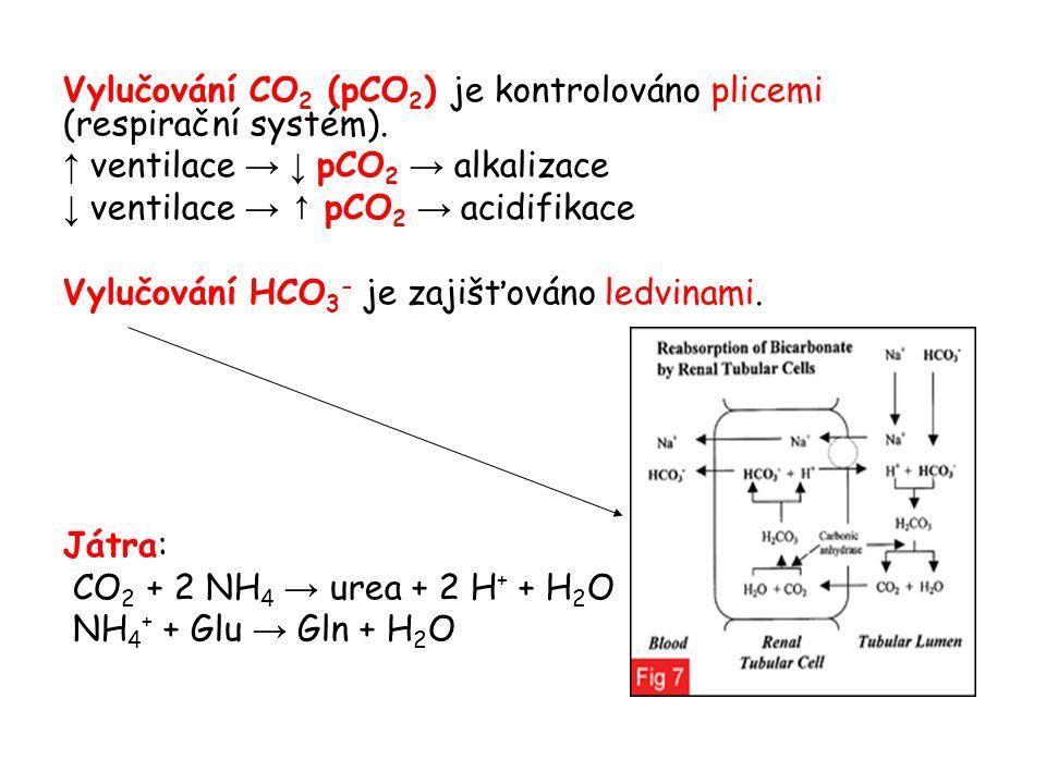 Vylučování CO2 (pCO2) je kontrolováno plicemi (respirační systém).
