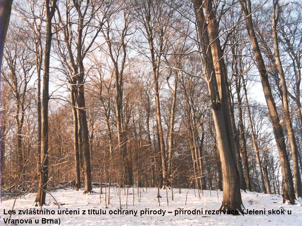 Les zvláštního určení z titulu ochrany přírody – přírodní rezervace (Jelení skok u Vranova u Brna)