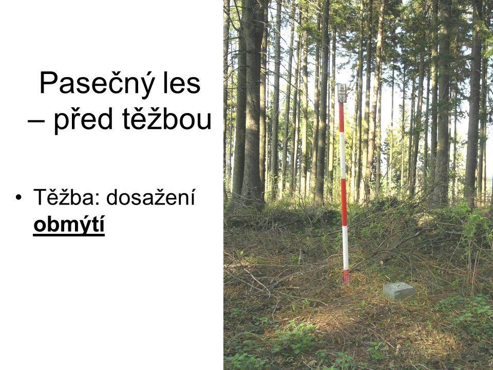 Pasečný les – před těžbou