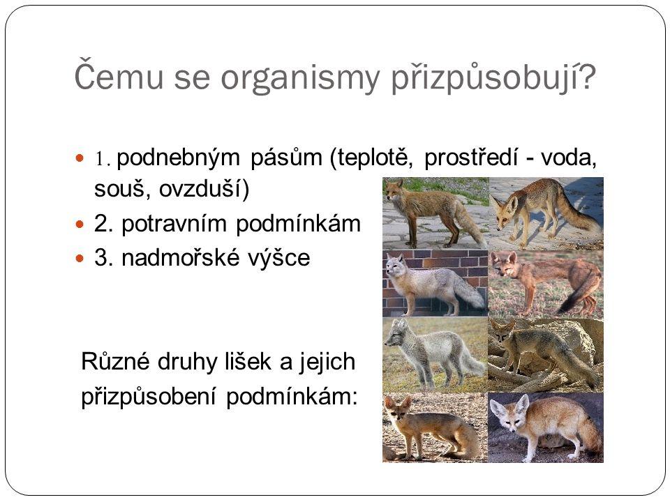 Čemu se organismy přizpůsobují