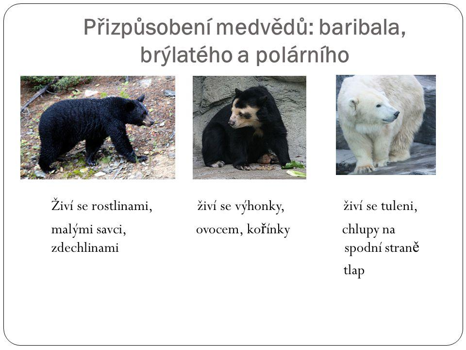 Přizpůsobení medvědů: baribala, brýlatého a polárního