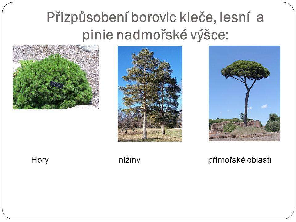 Přizpůsobení borovic kleče, lesní a pinie nadmořské výšce: